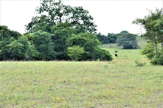 TBD County Road 205, Centerville, TX 75833 (MLS #22341247) :: The SOLD by George Team