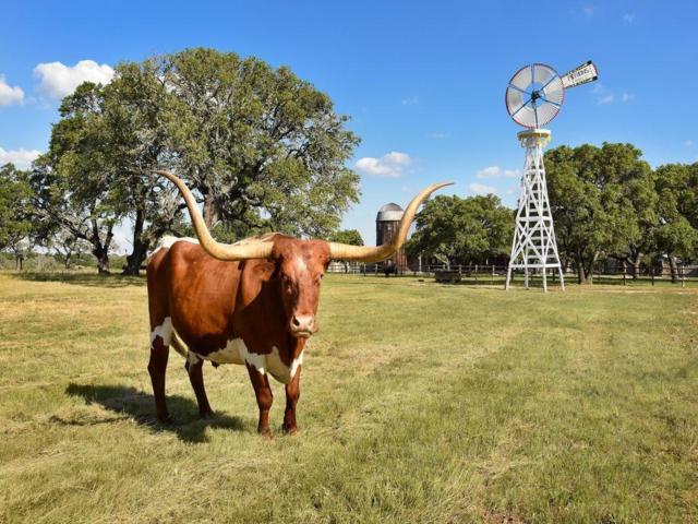 236 Doss Spring Creek Road, Fredericksburg, TX 78624 (MLS #29822283) :: Texas Home Shop Realty