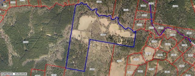 3575 County Rd 4210, Woodville, TX 75979 (MLS #30280547) :: The Queen Team