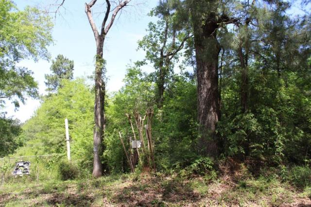 17 ac County Rd 1090, Wiergate, TX 75977 (MLS #36209242) :: The Home Branch