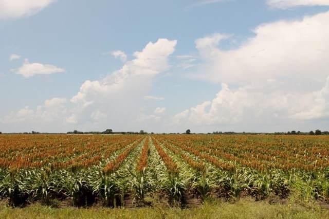 000 Koym Road, Beasley, TX 77417 (MLS #44456641) :: The Sansone Group