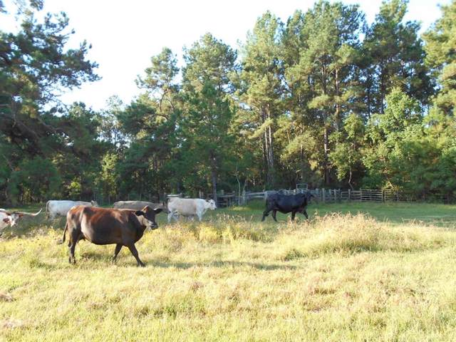 0000 Old Beaumont Rd Lake, Sour Lake, TX 77659 (MLS #45882188) :: The Bly Team