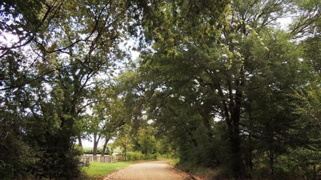 24.5 Acres County Road 335, Caldwell, TX 77836 (MLS #51368122) :: Christy Buck Team