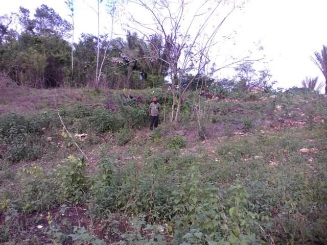 5627 Block 20/ 5627 Western Belmopan - Belize, Other, TX 99999 (MLS #57468951) :: Michele Harmon Team