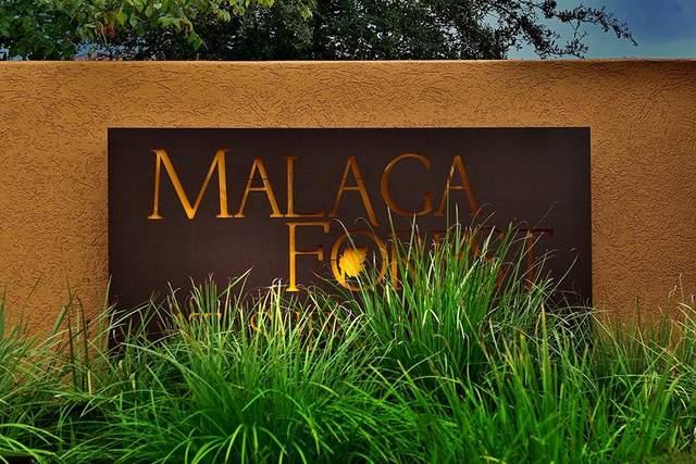 1466 Malagueta Court, Shenandoah, TX 77384 (MLS #60817162) :: Lerner Realty Solutions