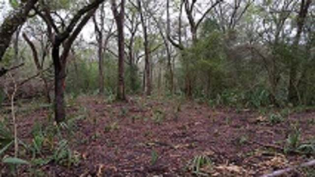 5707 County Road 348, Brazoria, TX 77422 (MLS #62916756) :: Ellison Real Estate Team