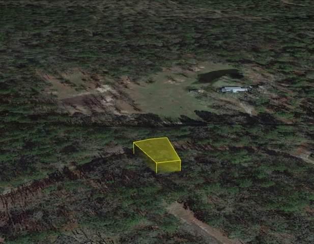 0 Deep Forest, Trinity, TX 75862 (MLS #64014287) :: Guevara Backman