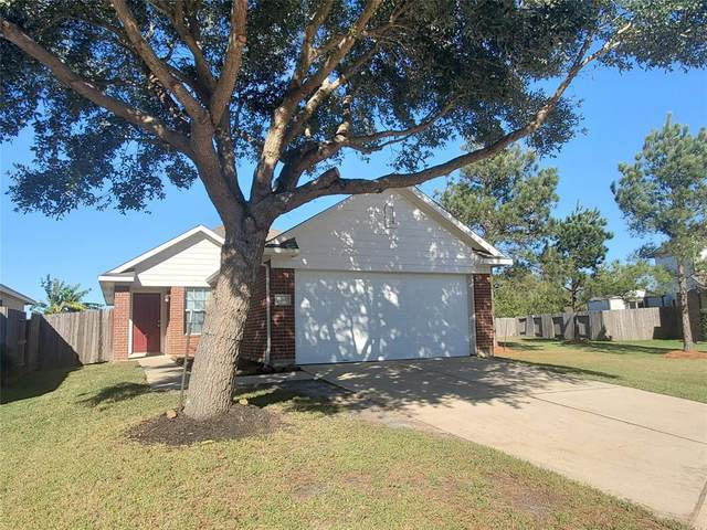 24314 Palm Cockatoo Drive, Hockley, TX 77447 (MLS #71769051) :: Homemax Properties