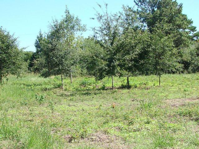 20750 Emerald Street, Prairie View, TX 77446 (MLS #90422064) :: Magnolia Realty
