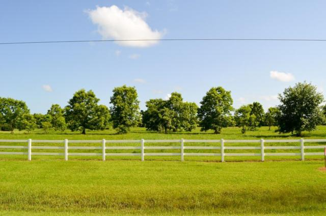 903 Fm 1462, Rosharon, TX 77583 (MLS #97199741) :: Texas Home Shop Realty