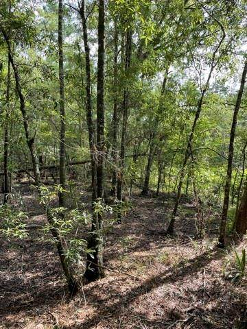 TBD Windomere Drive, Livingston, TX 77351 (MLS #10759194) :: The SOLD by George Team