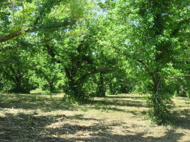 00 County Rd 267, Elm Grove, TX 77434 (MLS #21279204) :: Texas Home Shop Realty