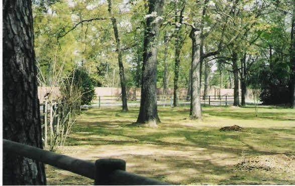 12929 Spring Cypress Road, Tomball, TX 77377 (MLS #21494603) :: The Heyl Group at Keller Williams