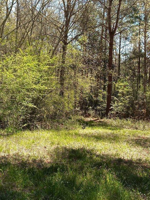 1674 Fm 1746, Woodville, TX 75979 (MLS #26889493) :: The Home Branch