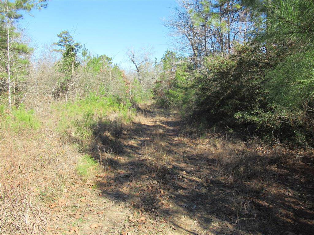 TBD Mangum Road - Photo 1