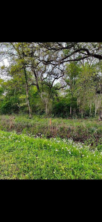TBD County Road 348, Brazoria, TX 77422 (MLS #31058957) :: Connect Realty