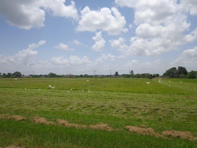 803 Cross Timbers Drive, Rosharon, TX 77583 (MLS #34729823) :: Caskey Realty