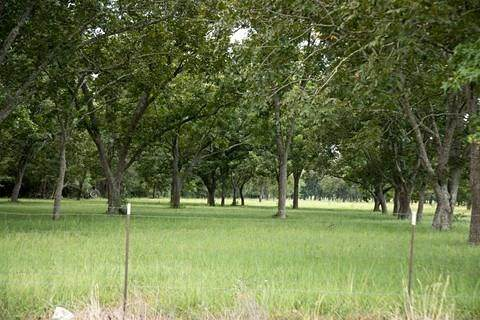 4132 Fm 1127 Road, Shepherd, TX 77371 (MLS #38773033) :: Christy Buck Team