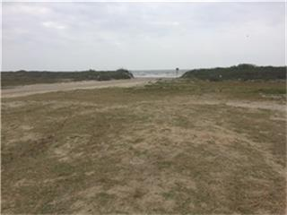 2174 Noisy Waves, Crystal Beach, TX 77650 (MLS #39827642) :: Giorgi Real Estate Group