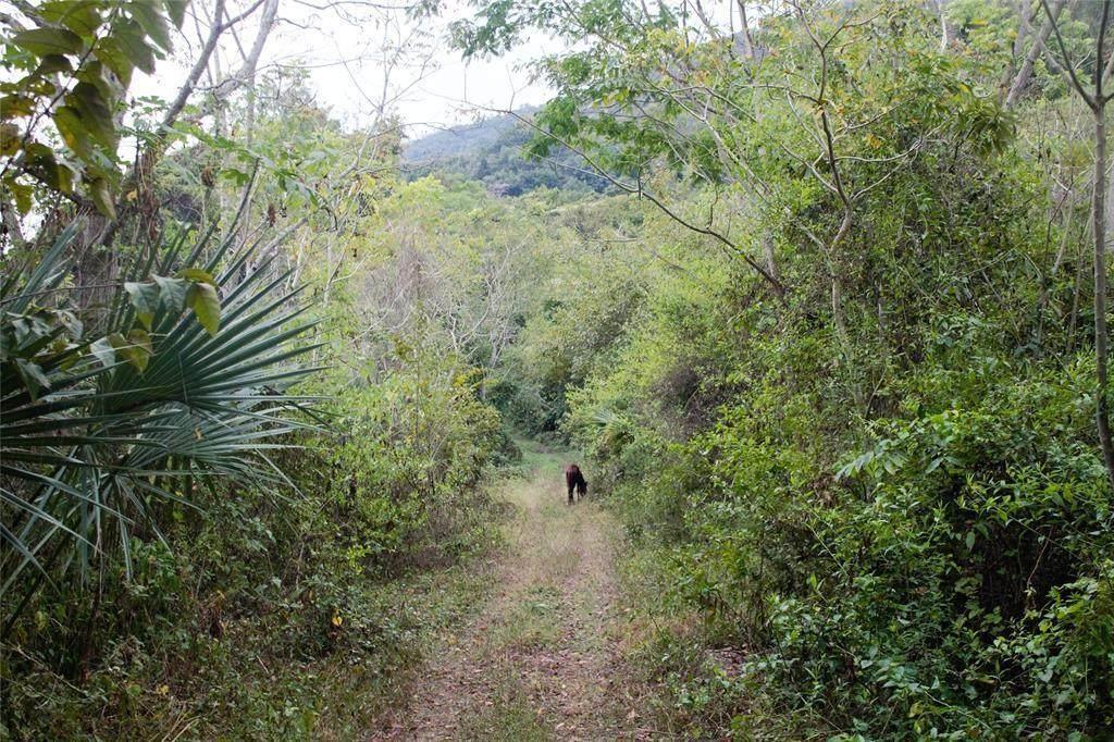 34 Ciudad Del Maiz - Photo 1