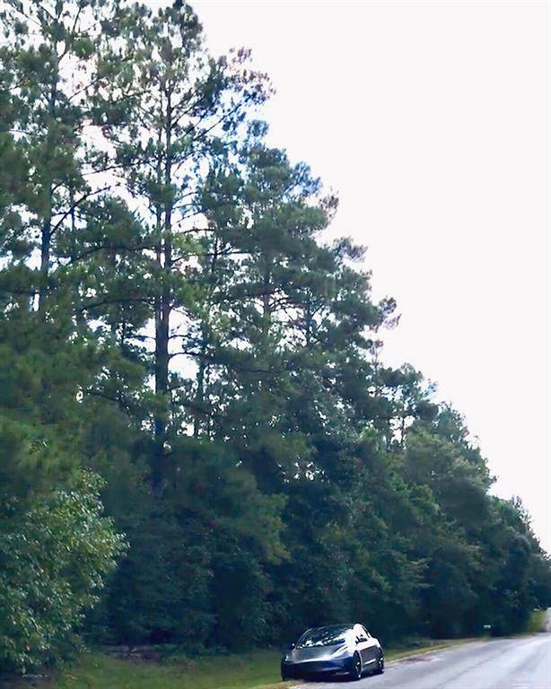 2174 Mangum Road, Livingston, TX 77351 (MLS #4313886) :: Green Residential
