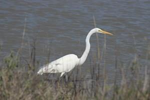 0 Flamingo, Sargent, TX 77414 (MLS #46960352) :: Magnolia Realty