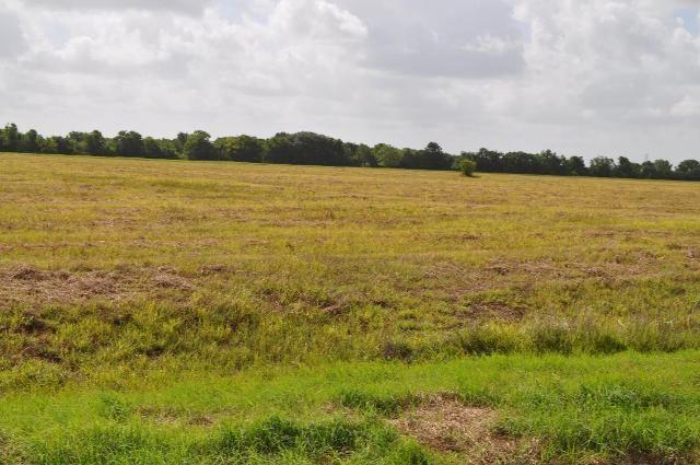 0 Stampede Trail, Angleton, TX 77486 (MLS #47564085) :: Ellison Real Estate Team