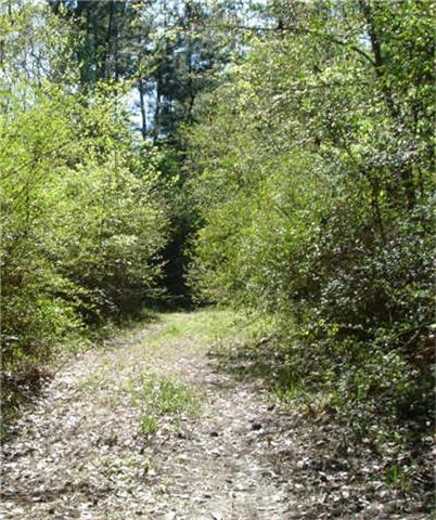 0 Arborgrove Lane, Humble, TX 77338 (MLS #52696664) :: Texas Home Shop Realty