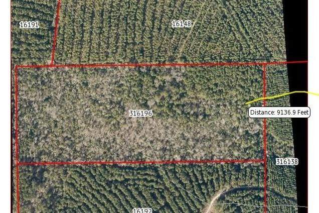 000 Timber Road 3, Colmesneil, TX 75938 (MLS #53013557) :: Christy Buck Team