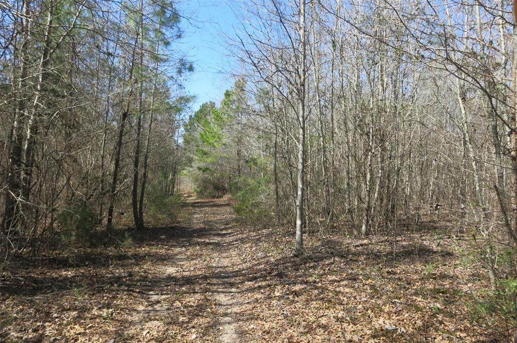000 Fm 449 Noonday Rd Road - Photo 1