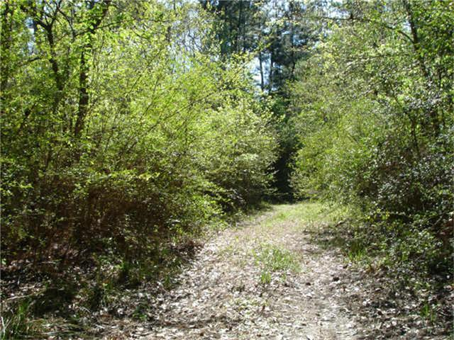 0 Arborgrove Lane, Humble, TX 77338 (MLS #57835545) :: Texas Home Shop Realty