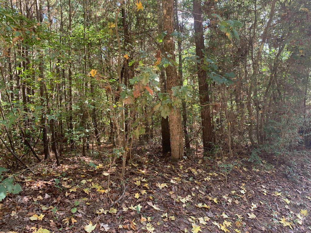 551 Wilderness Road - Photo 1