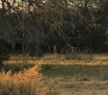 0 Lola Oak Lane, Sheridan, TX 77475 (MLS #63259915) :: The SOLD by George Team