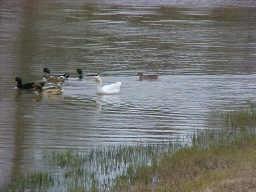 634 N Commons View Drive, Houston, TX 77336 (MLS #65372655) :: Magnolia Realty