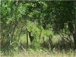 28931 Village Trail Court, Magnolia, TX 77355 (MLS #6697102) :: Giorgi Real Estate Group