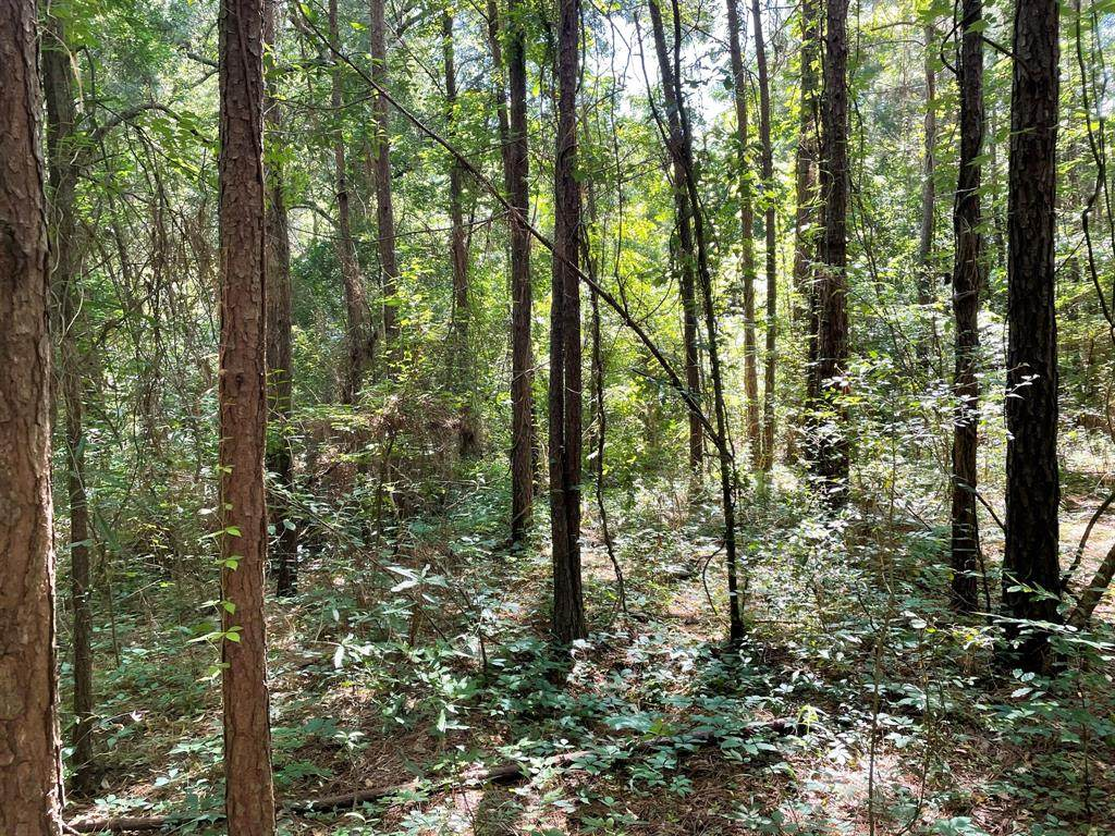 14571 Coushatta Trail - Photo 1