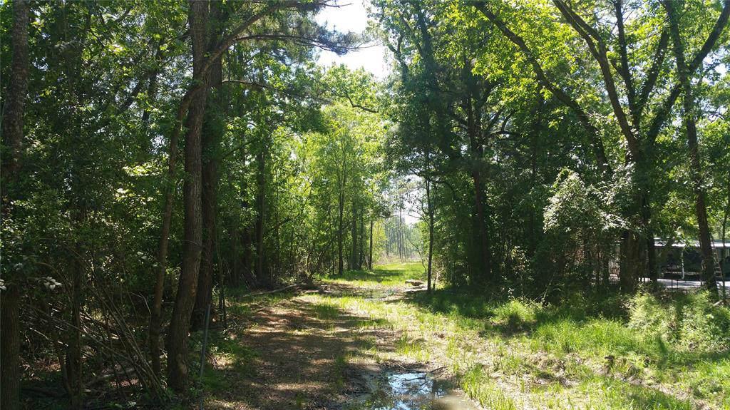 22542 Tree Monkey Road - Photo 1