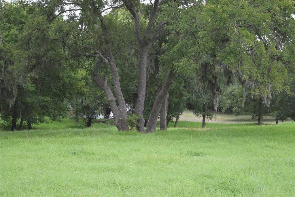 154 River Tree Drive - Photo 1