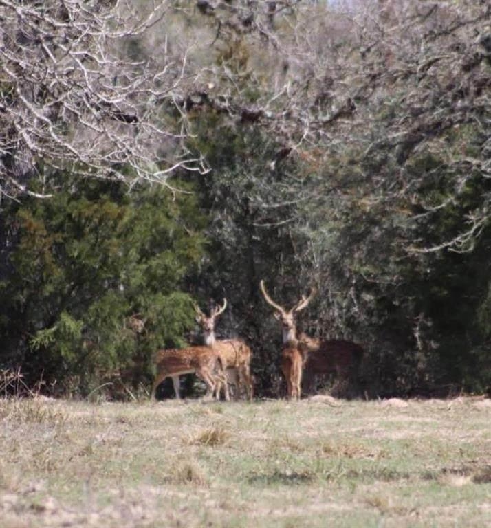 246 County Road 152 - Photo 1