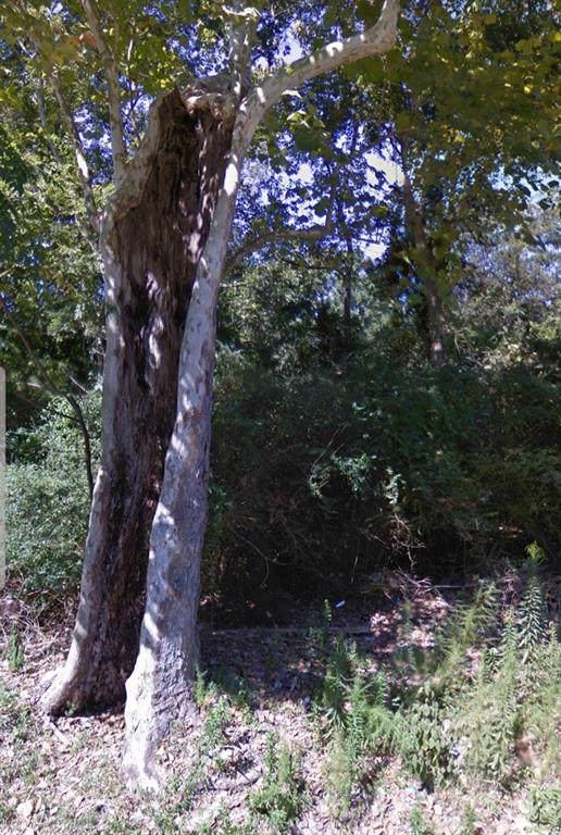 19407 Banks Street, Humble, TX 77338 (MLS #80823517) :: NewHomePrograms.com LLC