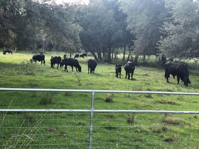 4008 County Road 326, Alvin, TX 77511 (MLS #83471971) :: The Johnson Team
