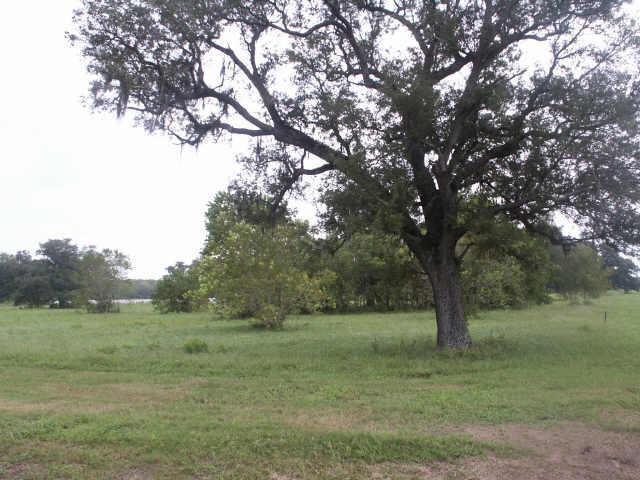 16734 Wrangler Rd, Rosharon, TX 77583 (MLS #84249566) :: The Queen Team