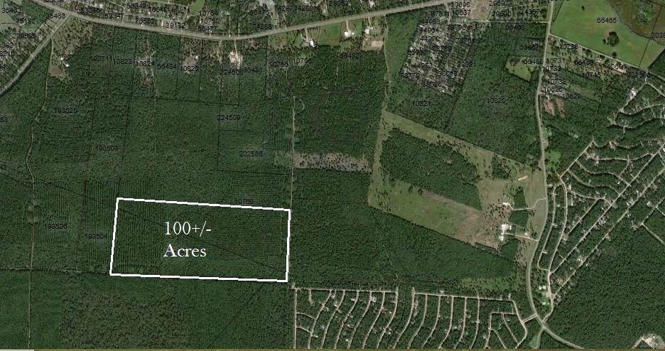 100 B Acres Jenning Branch - Photo 1