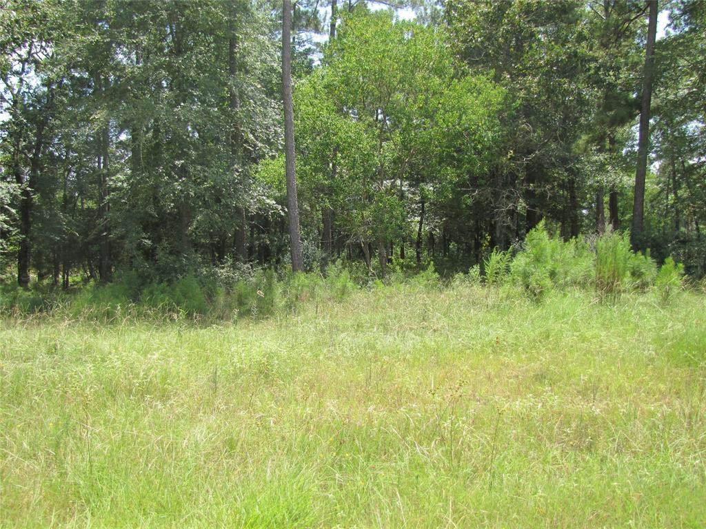 28332 Meadow Forest - Photo 1