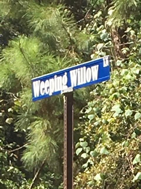 0 Weeping Willow Lane, Plantersville, TX 77363 (MLS #86902416) :: The Parodi Team at Realty Associates