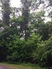TBD Pine Brook, New Caney, TX 77357 (MLS #87264861) :: Christy Buck Team