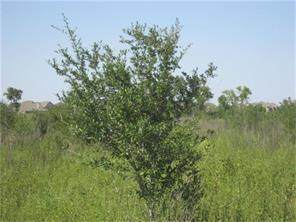 0000000 Joerger, Rosenberg, TX 77471 (MLS #88236091) :: Homemax Properties