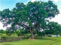 623 High Meadow Ranch, Magnolia, TX 77355 (MLS #90921633) :: Giorgi & Associates, LLC