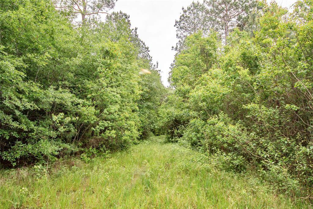 Tract A County Road 2184 - Photo 1