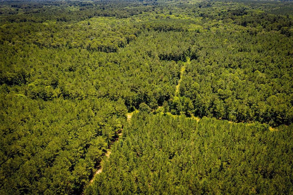 965 Acres U.S. 190 - Photo 1